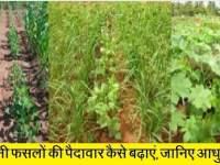 खरीफ तिलहनी फसलों की पैदावार कैसे बढ़ाएं
