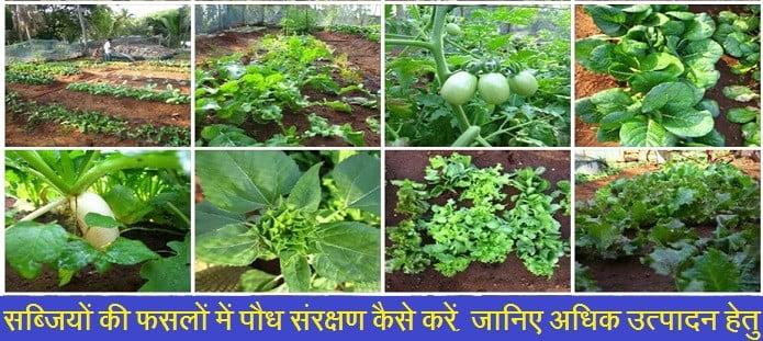 सब्जियों की फसलों