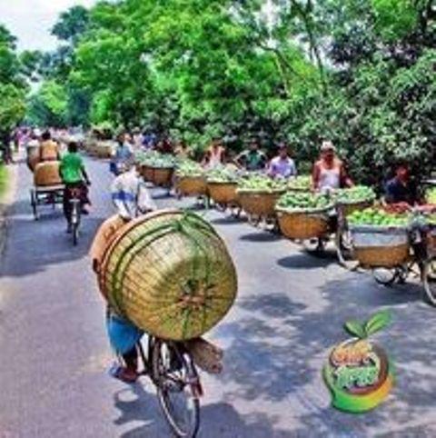 চাঁপাইনবাবগঞ্জে আমের দাম নেই কপাল পুড়ছে আমচাষীর