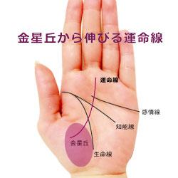 親指側から伸びる運命線の画像