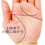 上向きで小指に向かう頭脳線