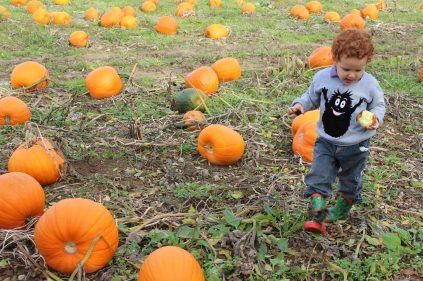 Pumpkin Patch at Ballycross