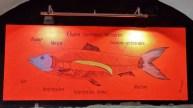 A Map of the Herring at Ambasada Sledzia