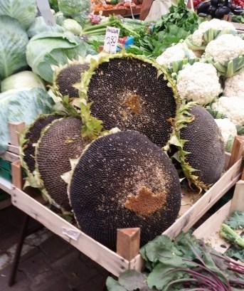 Sunflower Heads Full of Seeds