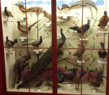 Case of Pheasants and Peacocks
