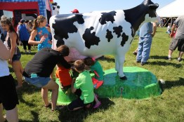 How do you milk a cow? Try it out!