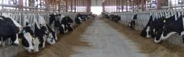 Kinnard_Farms-KF_Barn