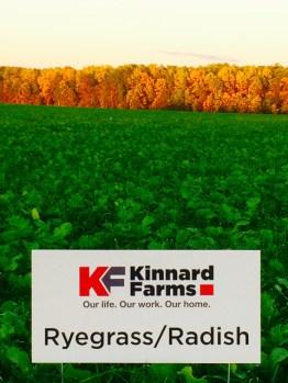 Kinnard_Farms-KF_Landscape4