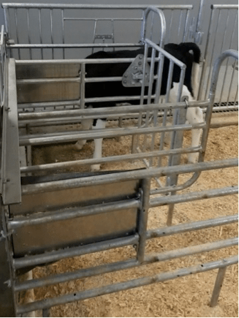 Figure 1 - Photo of AMF with gated sides made of steel. Photo taken at Dairy Research and Innovation Facility; Elora, Ontario.