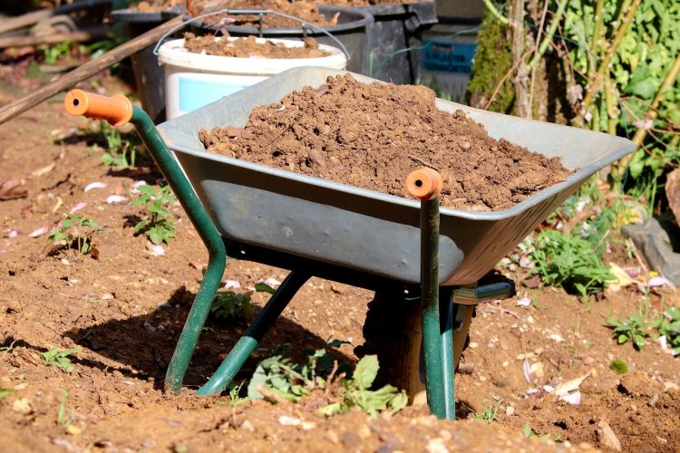 A wheelbarrow filled with soil from the garden. Small plants are planted on the ground.