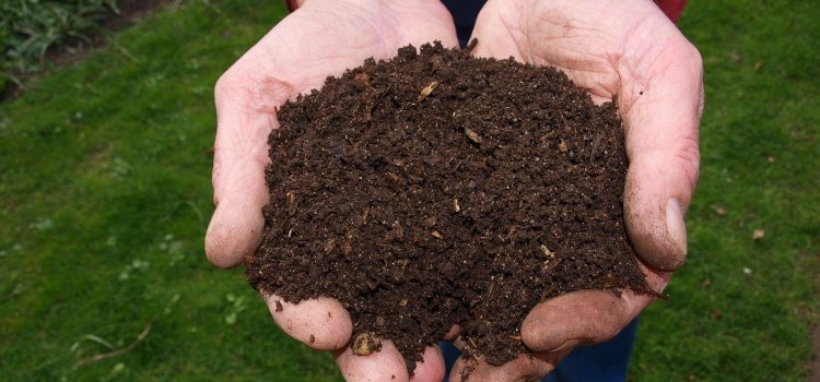 A man's hands holding two hands full of organic composted soil.