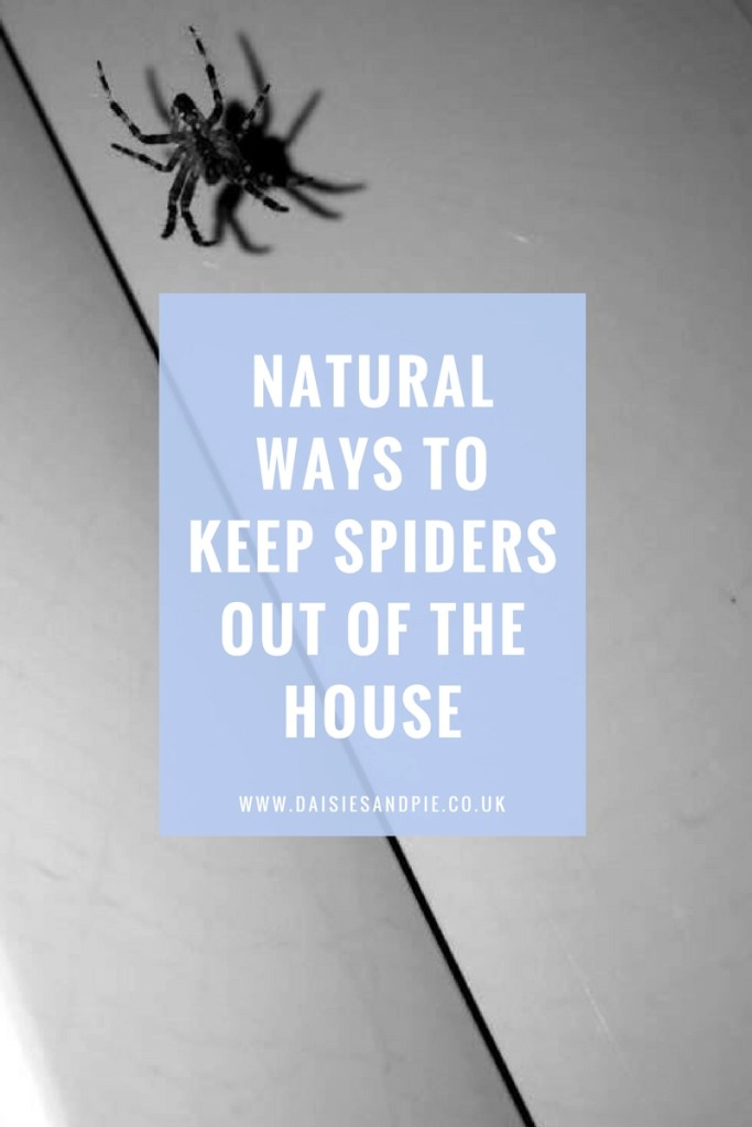 Natural ways to keep spiders out of the house, eco cleaning, green cleaning tips, natural homemaking