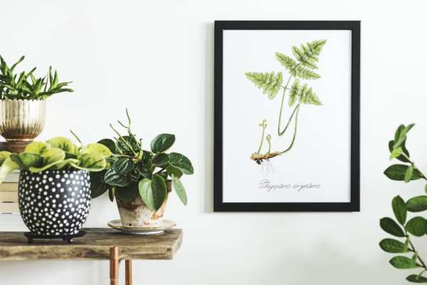 The Art of Wall Art: Modern Wall Decor Ideas and How to Hang Pictures Like a Pro