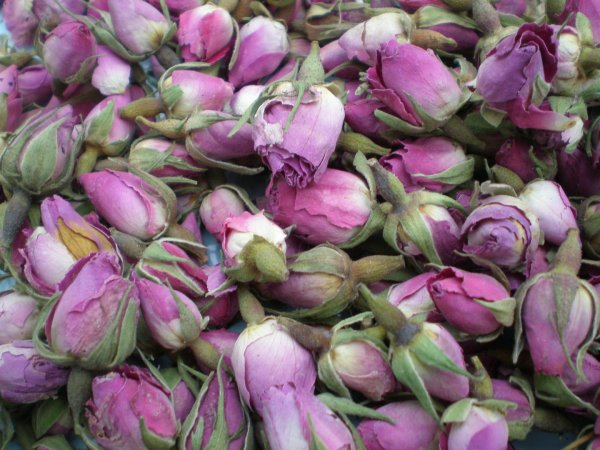 Pale Pink Rose Buds - Dried Flowers Daisyshop