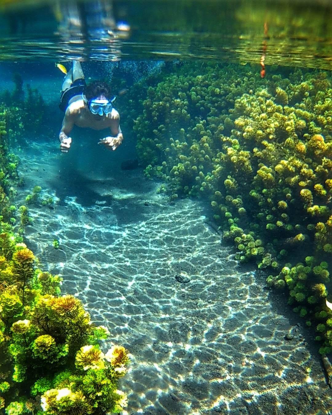 Berenang di Wisata Sumber Sirah bisa sambil lihat ganggang dan...