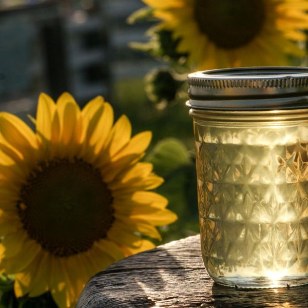sunflower-jelly