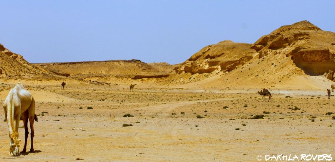 #DakhlaRovers #desert #Dakhla