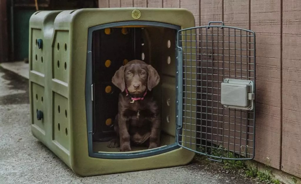 A puppy sits in a crate happy with its safe space.