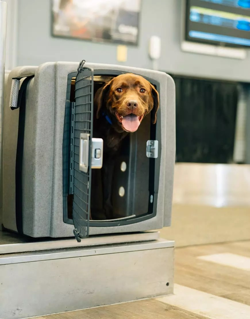 Jet Stream Air Travel Crate