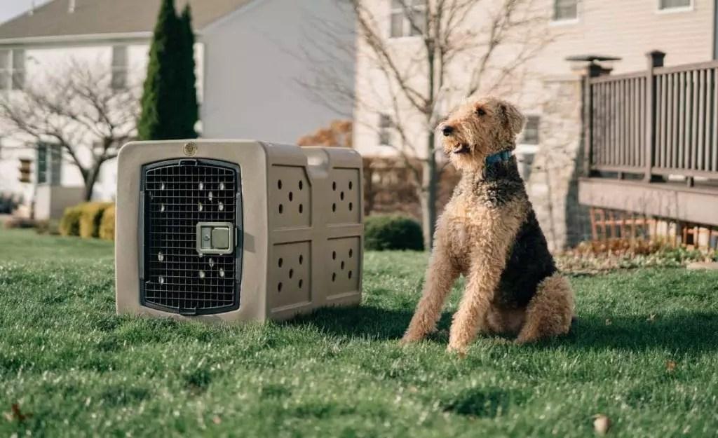 A medium sized dog sits next to a Dakota 283 G3 kennel