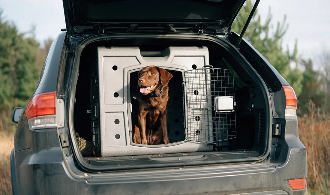 A lab sits in its 2D Side Entry kennel.