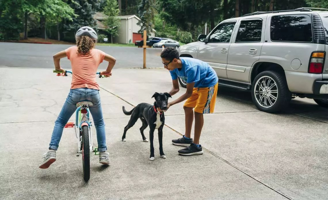 kids stop a dog from running into the street.