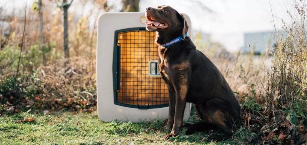 a Labrador retriever sits next to a Dakota 283 kennel in the Spring