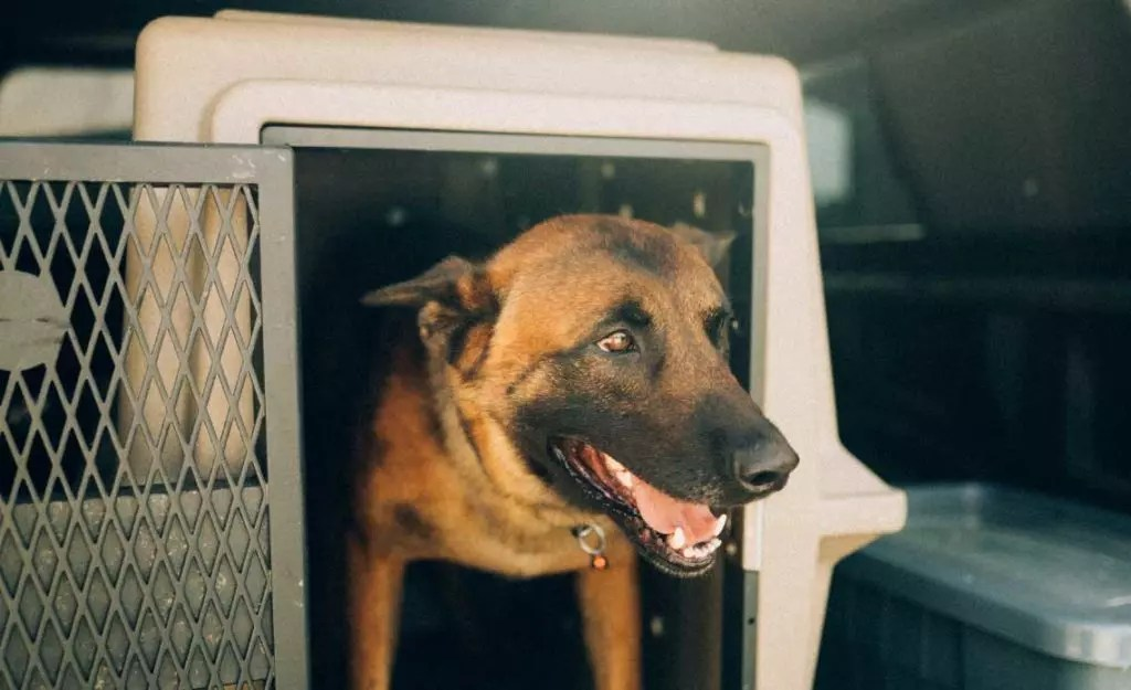 A dog in a kennel in a car