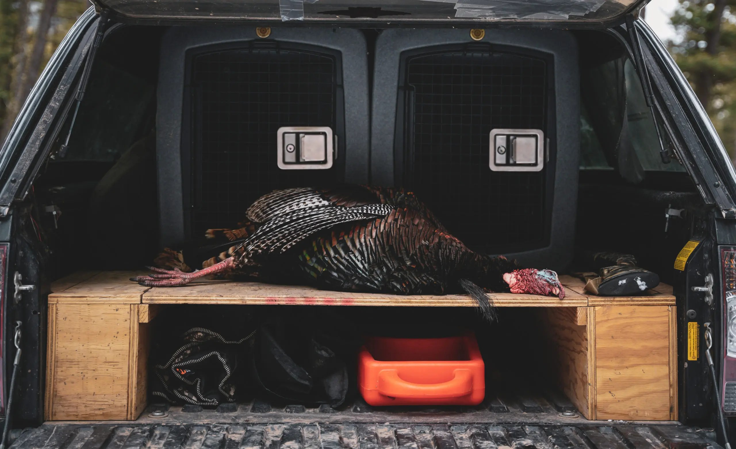 A dead turkey rests in the back of a truck.