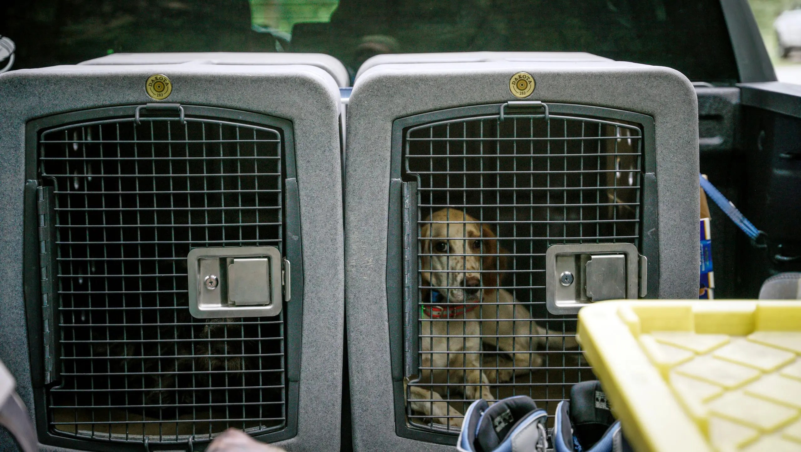 A dog rests in his Dakota 283 kennel.