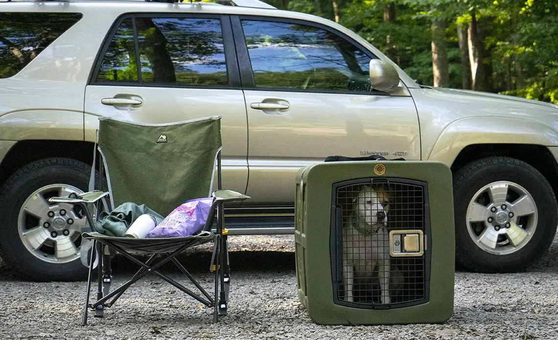An American Pitbull mix sits in her Dakota 283 G3 Large Kennel.