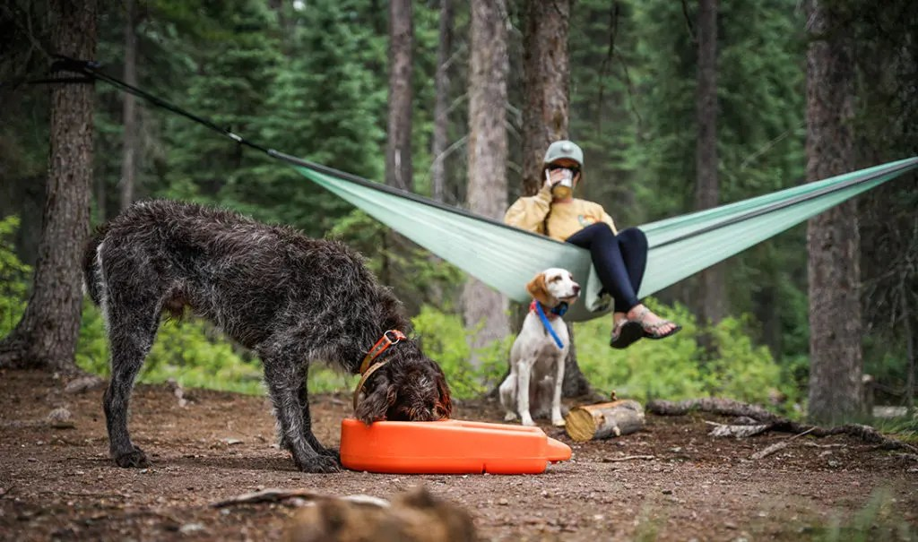 A dog eats food out of a Dakota 283 Dine N Dash