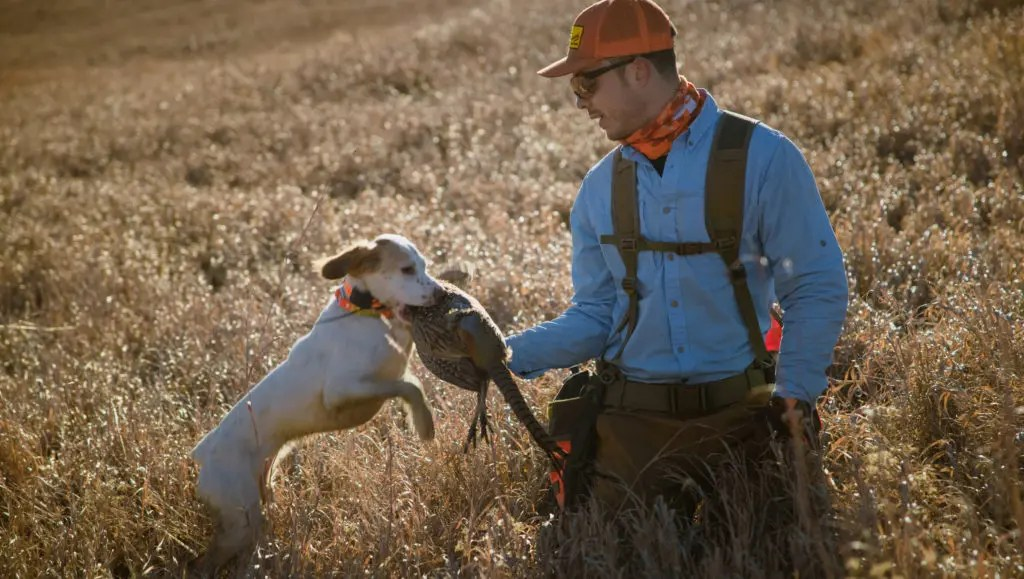 Nick Larson takes a pheasant from his dog.