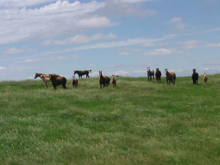 Horses Brown County 20150614