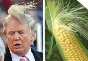 Donald Trump and corn
