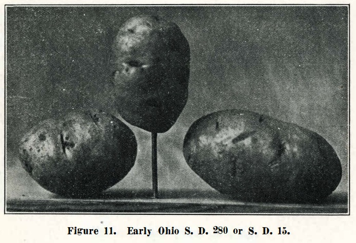 "Champlin, Manly and Winright, G., ""Potato Culture in South Dakota"" (1917). Bulletins. Paper 176, pp. 714–715. http://openprairie.sdstate.edu/agexperimentsta_bulletins/176"