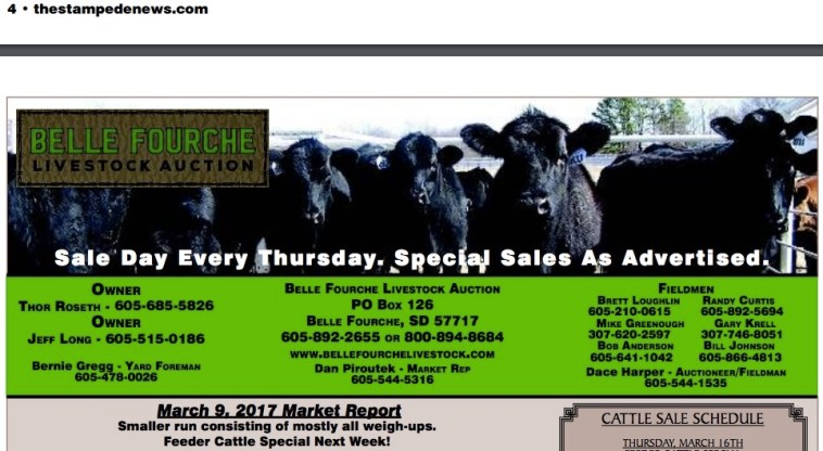 Belle Fourche Livestock in Stampede