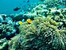 Feryna Wazheri's trip to Maldives (14)
