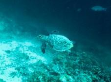 Feryna Wazheri's trip to Maldives (15)