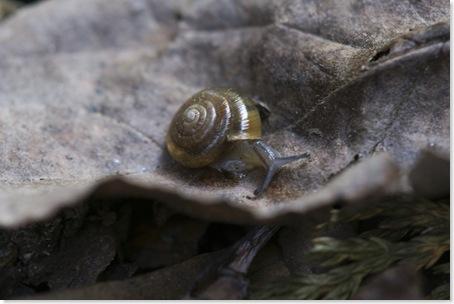 snail_on_the_run_3_thumb