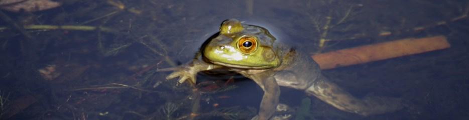 Wordless Wednesday: Frog Eyes