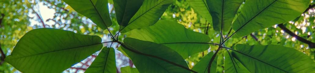 Wordless Wednesday: Summer Canopy
