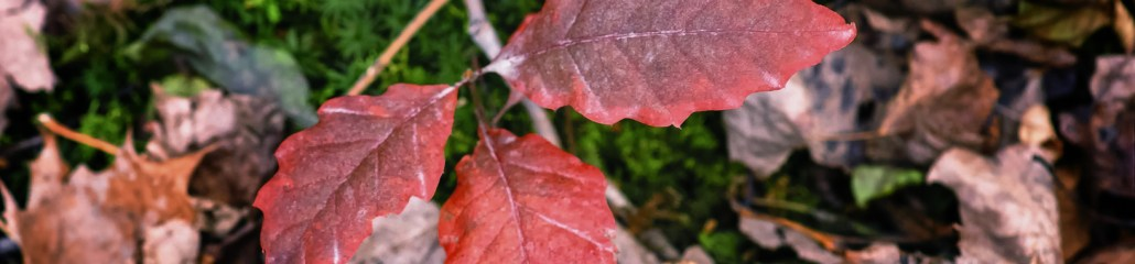 Single Frame: Autumn Close Up