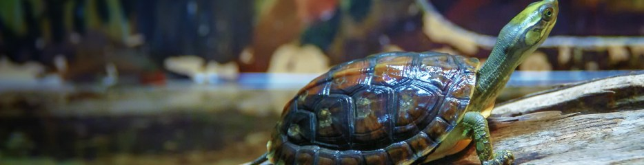 Wordless Wednesday: 5.1 Turtles