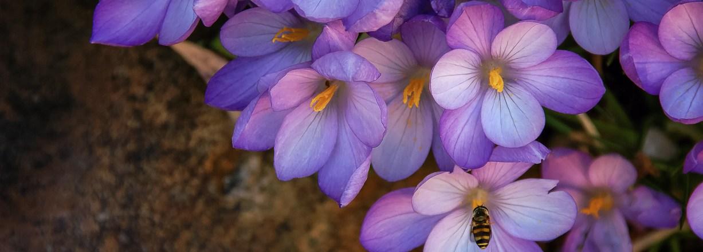Wordless Wednesday: Yellow and Purple