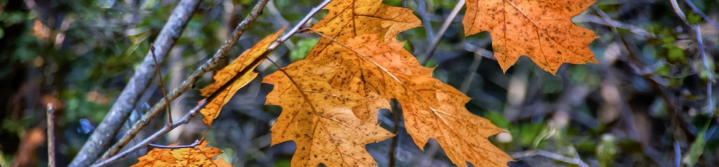 Single Frame: Autumn Close Up #3