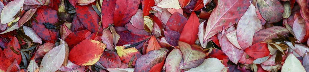 Single Frame: Autumn Close Up #5