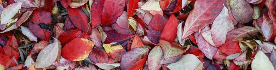 Single Frame: Autumn Close Up #5