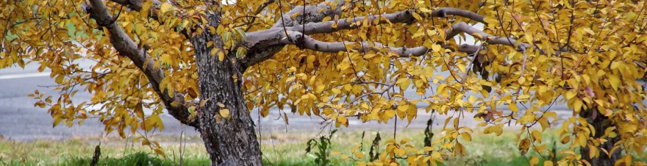 Wordless Wednesday: Autumn in an Apple Orchard