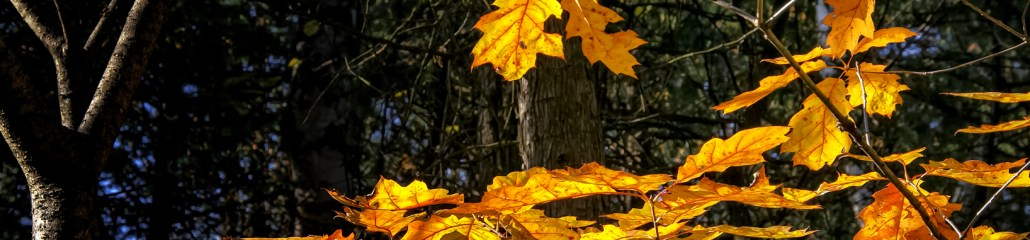 Single Frame: Autumn Close Up #7